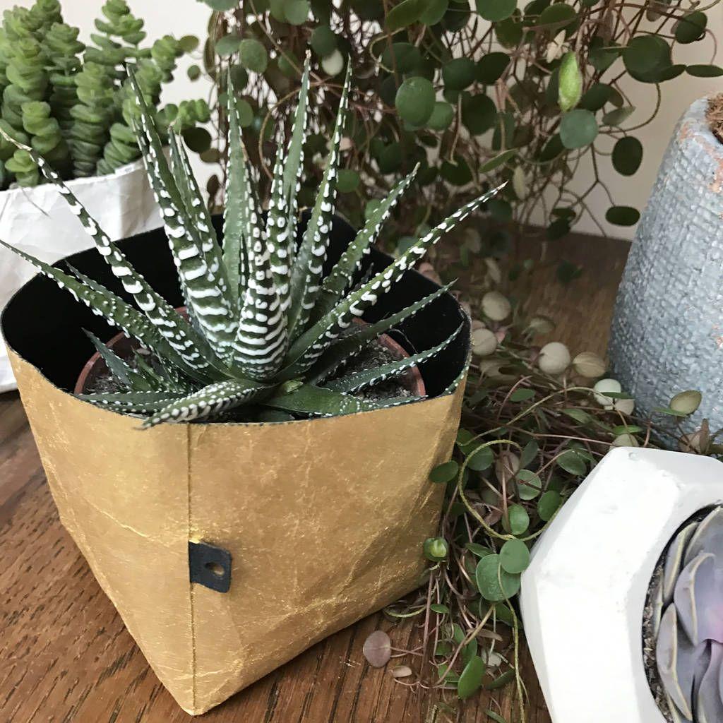 Arredare con le piante Piante, Piante da interno, Piante