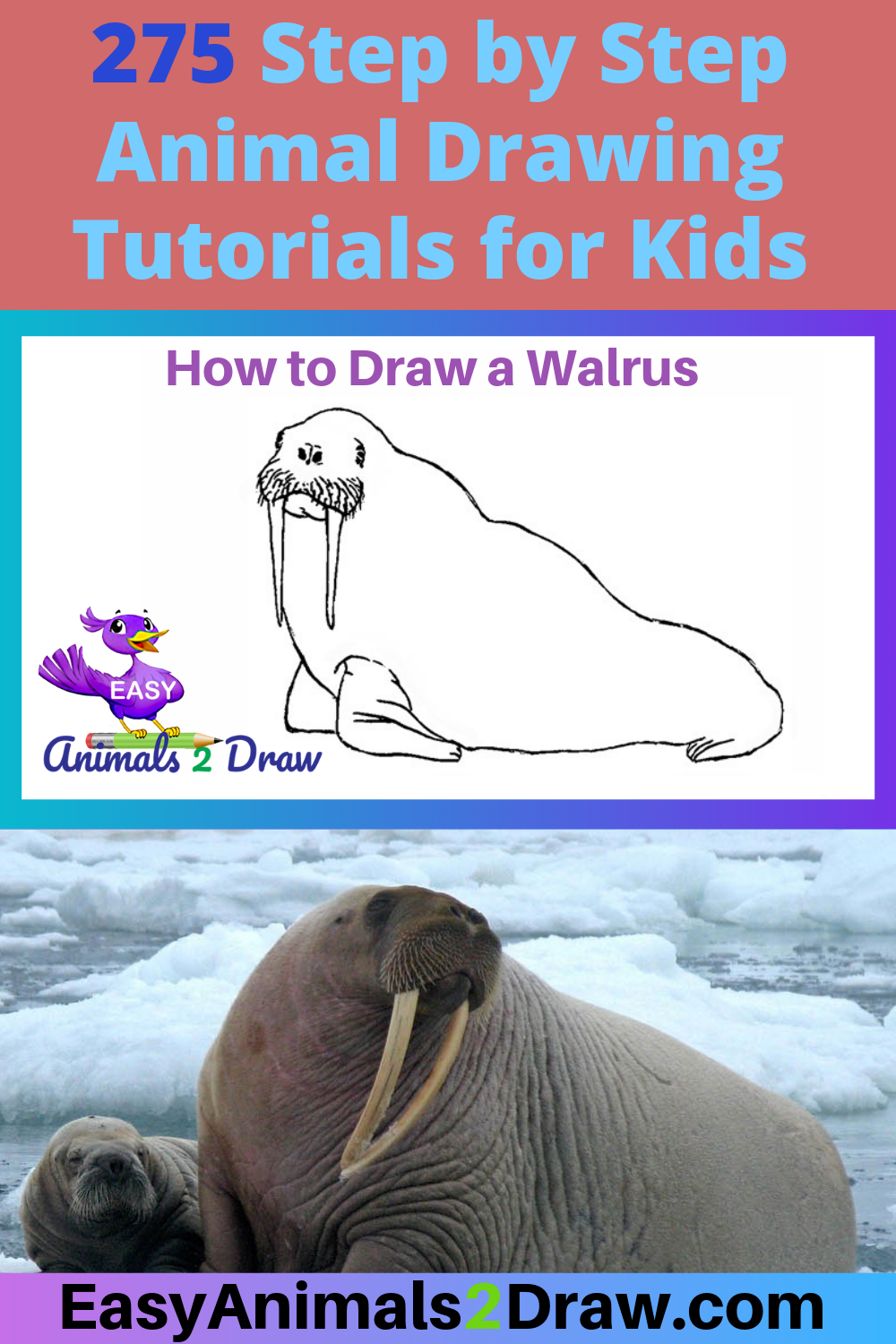 Learn How To Draw An Amazing Walrus With This Easy And Inspirational Step By Step Drawing Tutorial For Kids Of All Ages Easy Animals Animal Drawings Drawings