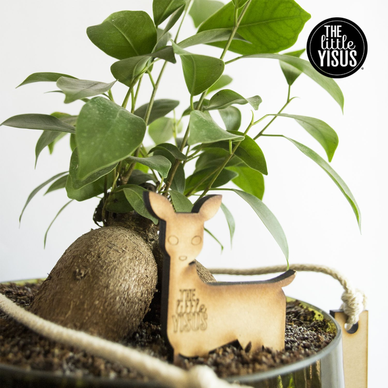 #ficus #plantas #thelittleyisus #littlepants, planta hidroponica en macetero hecho 100% con botellas de vidrio reciclado, para mas información: http://thelittleyisus.cl