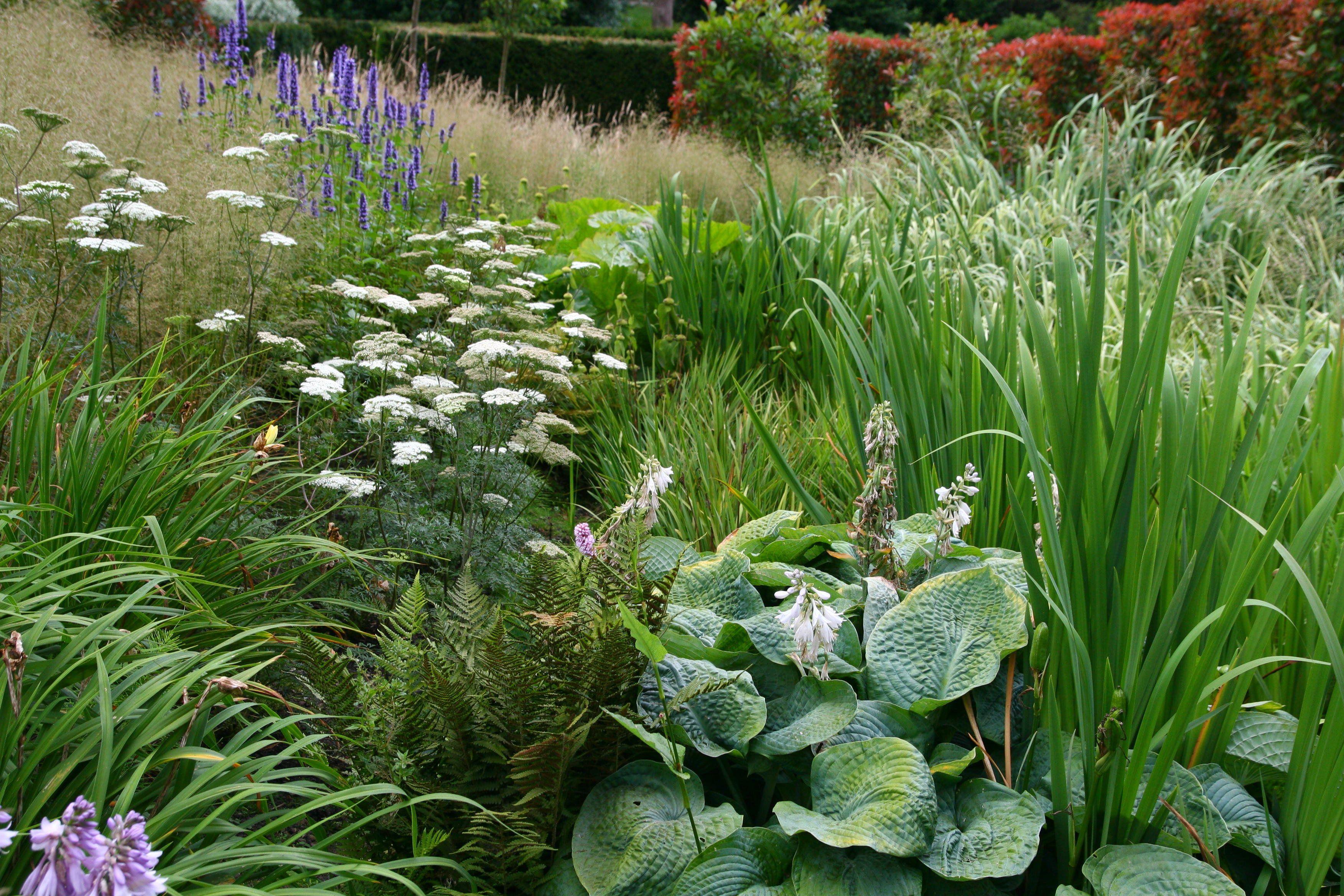 Bog Garden Planting Jeremy Allen Garden Design Bog Garden