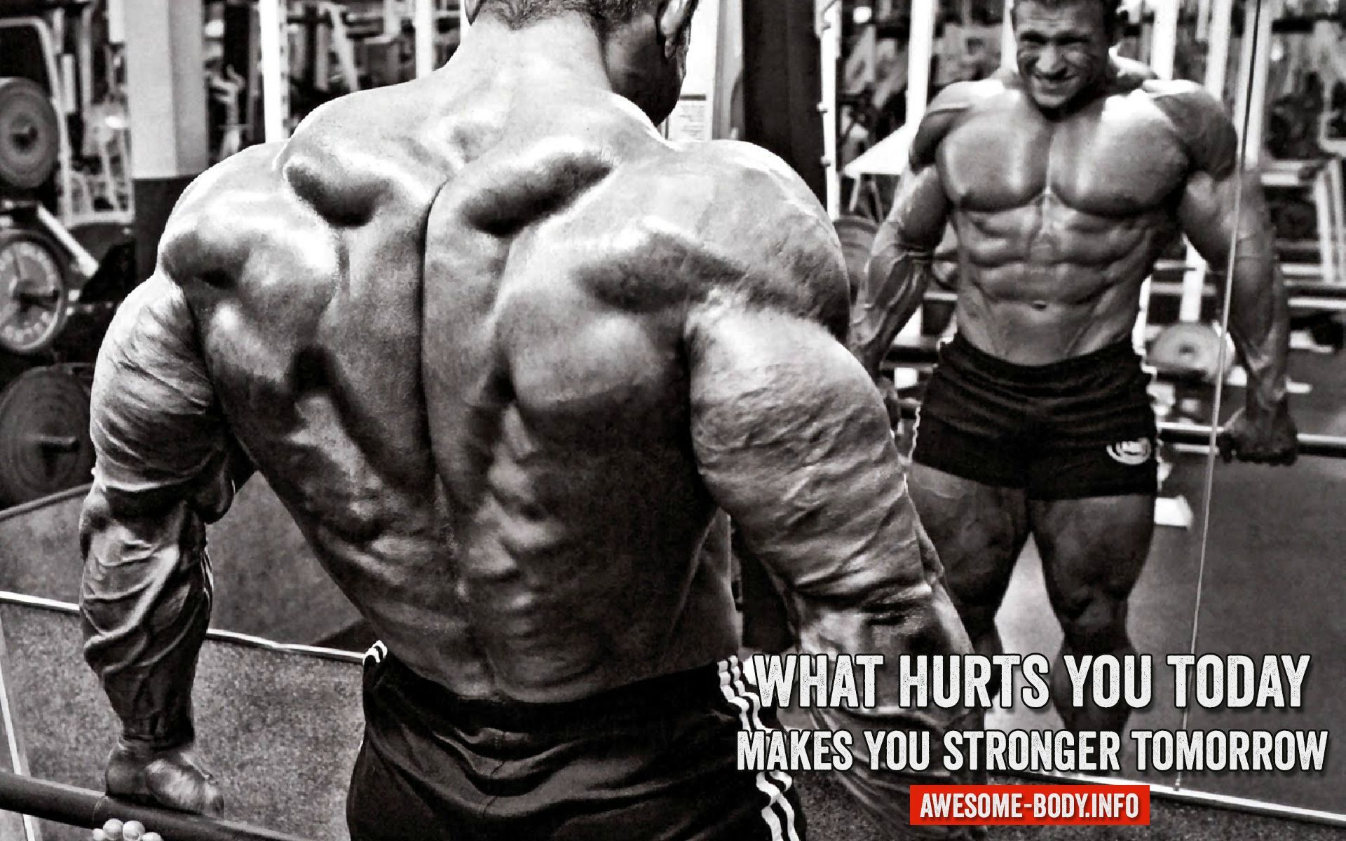 Bodybuilding Wallpapers Free Download Free Wallpapers