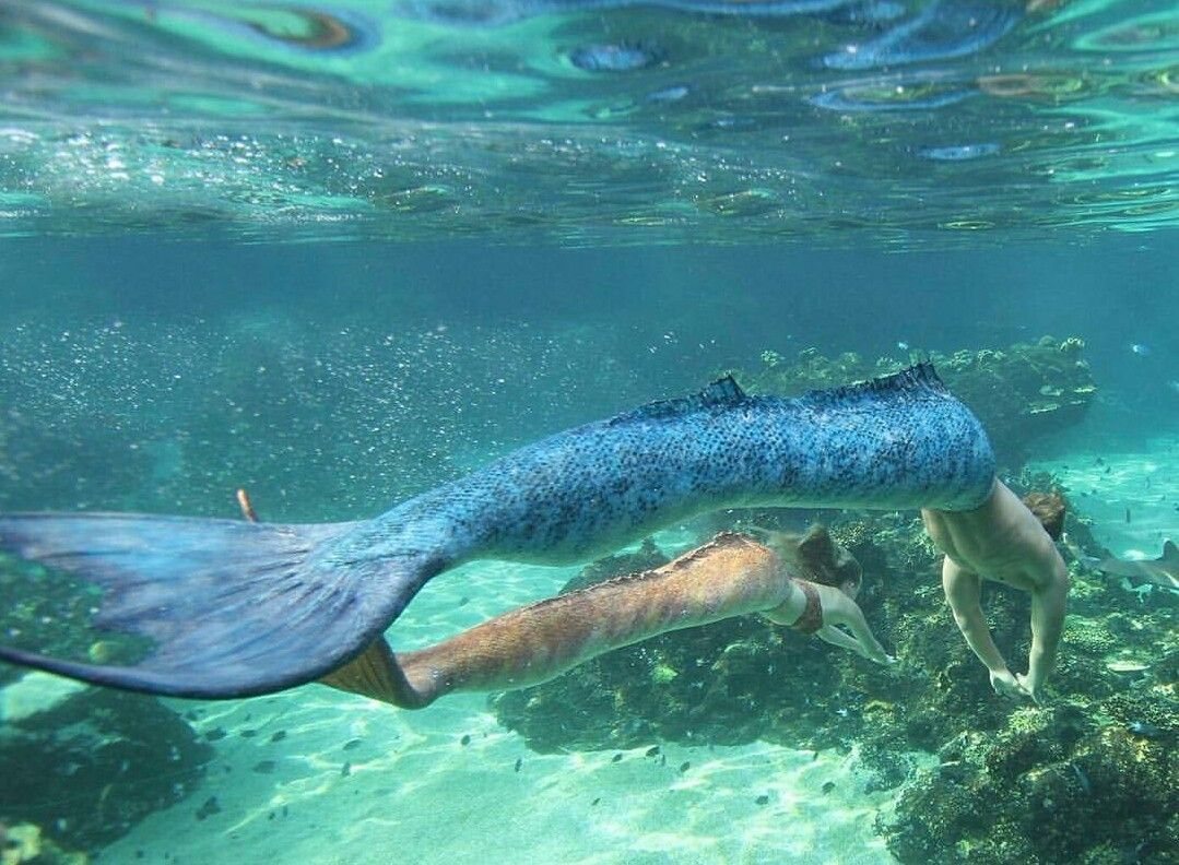 Mako mermaids | H2O | Pltzlich meerjungfrau, Einfach ...