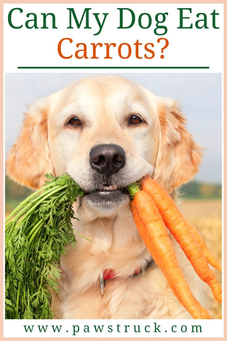 Are Carrots Good for Dogs? Health Benefits of Feeding Raw