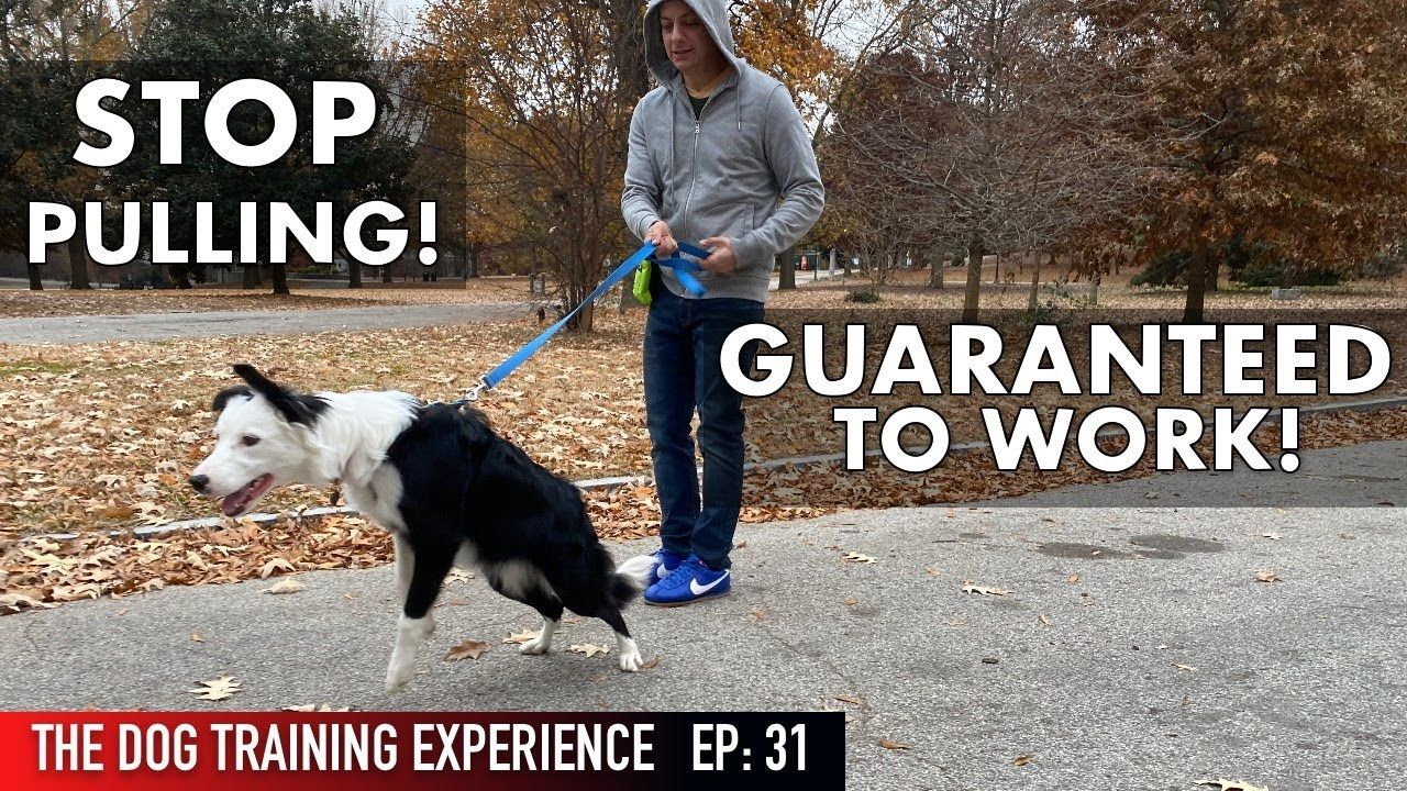 How To Teach Your Dog To Walk On A Leash Youtube And Pics Of