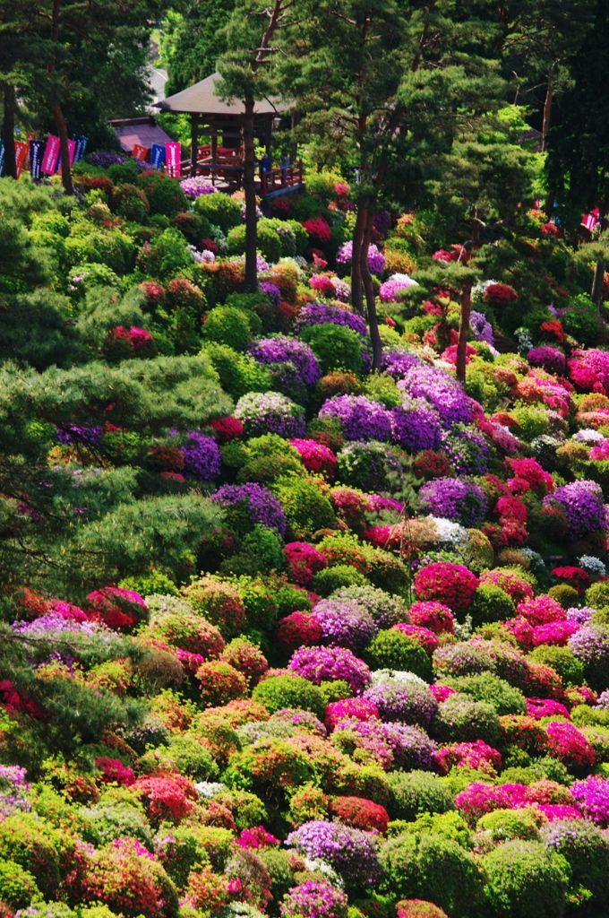 Arbustos de azalea en Shiofune Kannon Templo, Tokio, Japón PATIOS