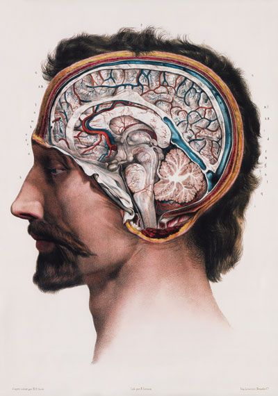 ML09 Vintage 1800\'s Medical Human Brain Surgical Anatomy Poster Re ...