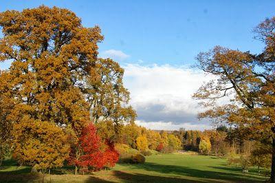 November gardens: The Yorkshire Arboretum - http://www.gardeningo.com/november-gardens-the-yorkshire-arboretum/ #Arboretum, #Gardens, #November, #Yorkshire