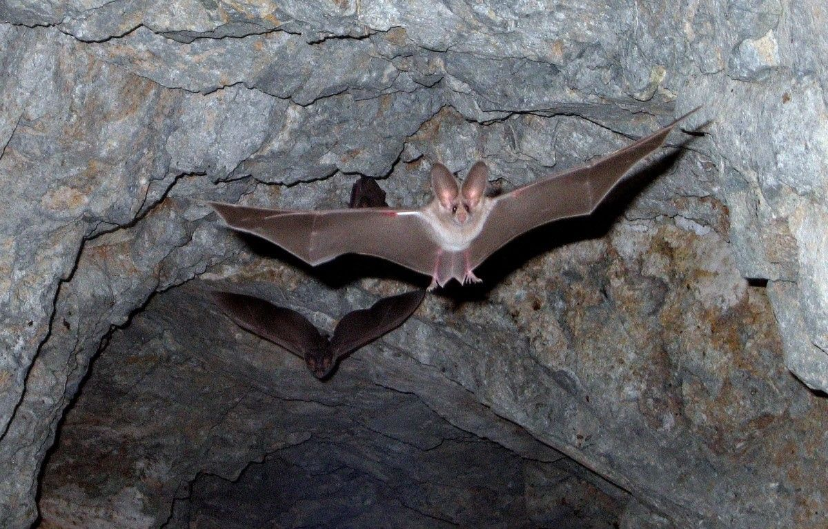 how to get rid of bats in trees