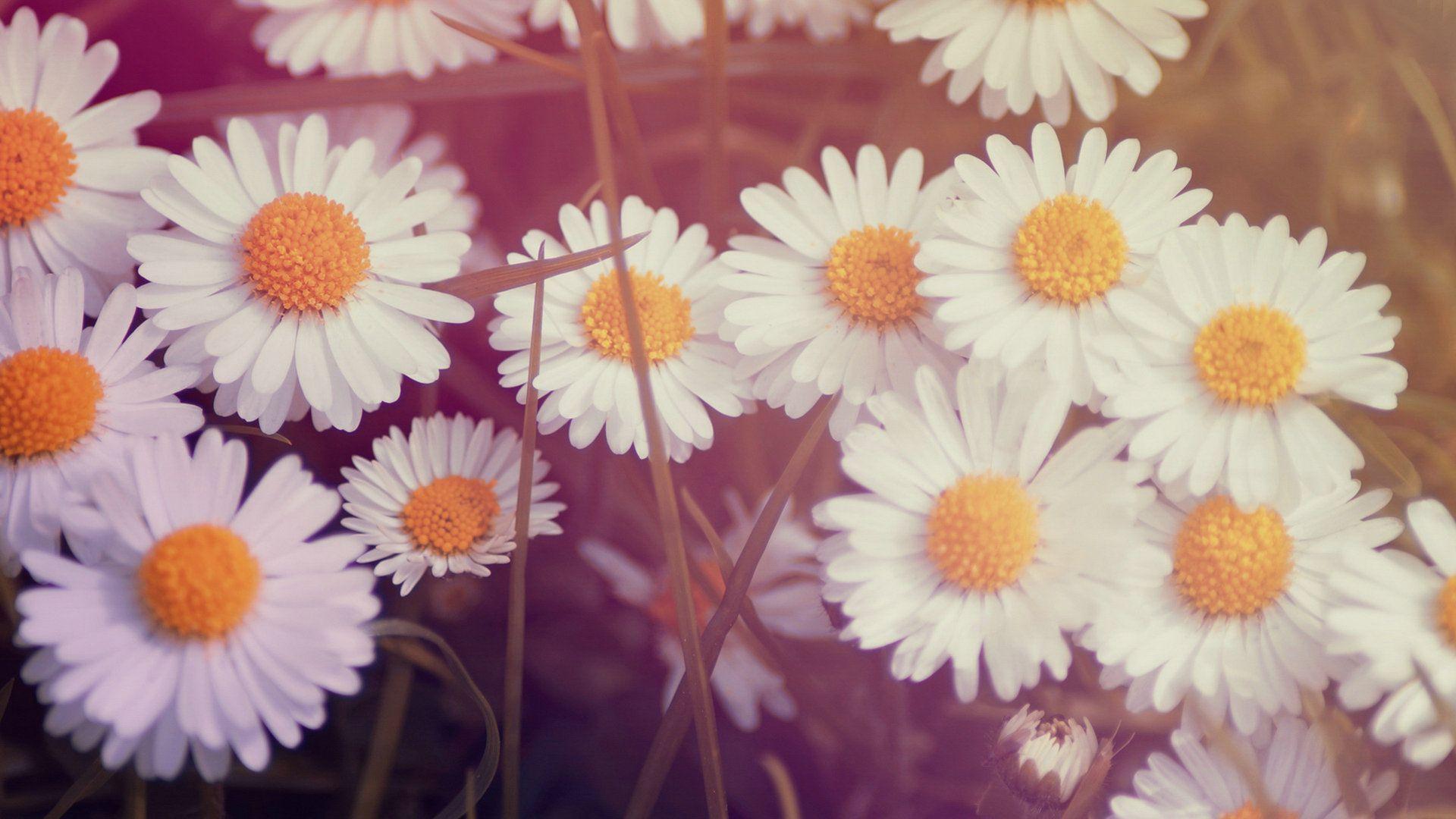 Best Vintage Flowers Wallpaper Ideas On Pinterest Flower