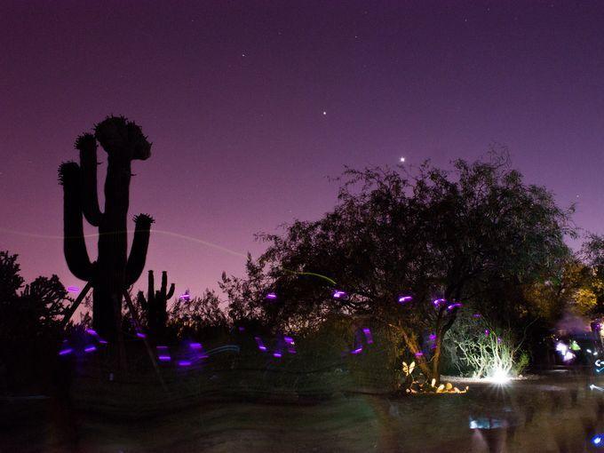 Flashlight Tours At The Az Botanical Gardens