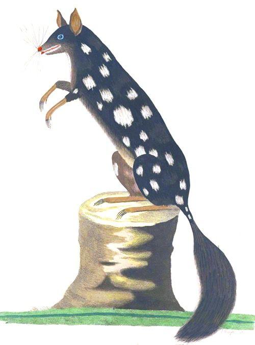 Oppossum/Voyage of Governor Phillip to Botany Bay