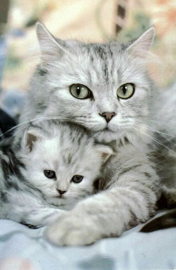 Cute Baby Animals That Will Melt Even Stone Cold Heart 8 Cute