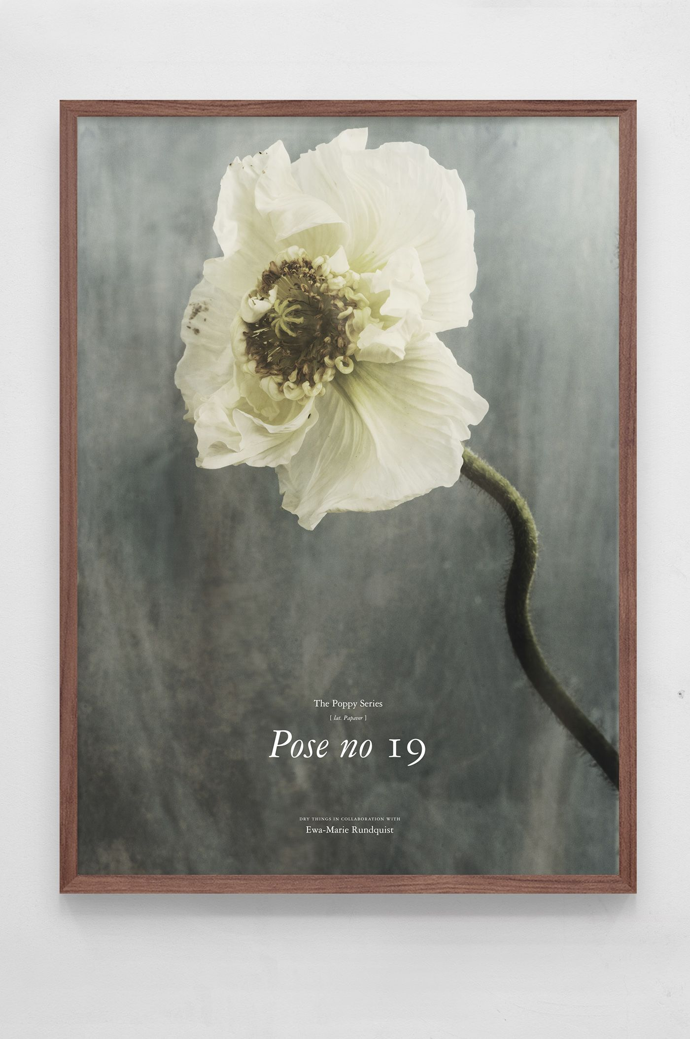 Poppies Pose No 19 By Swedish Designers Dry Thingssee More At Www