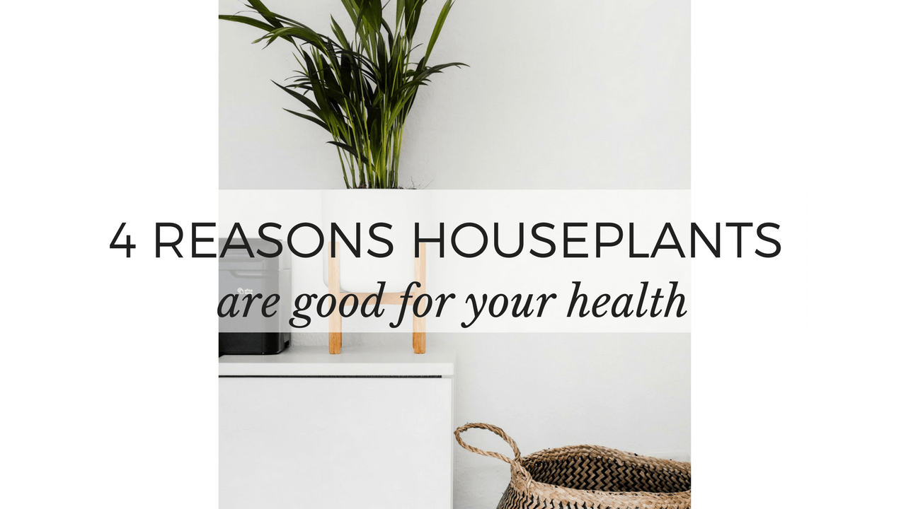 reasons houseplants are good for your health houseplants spider