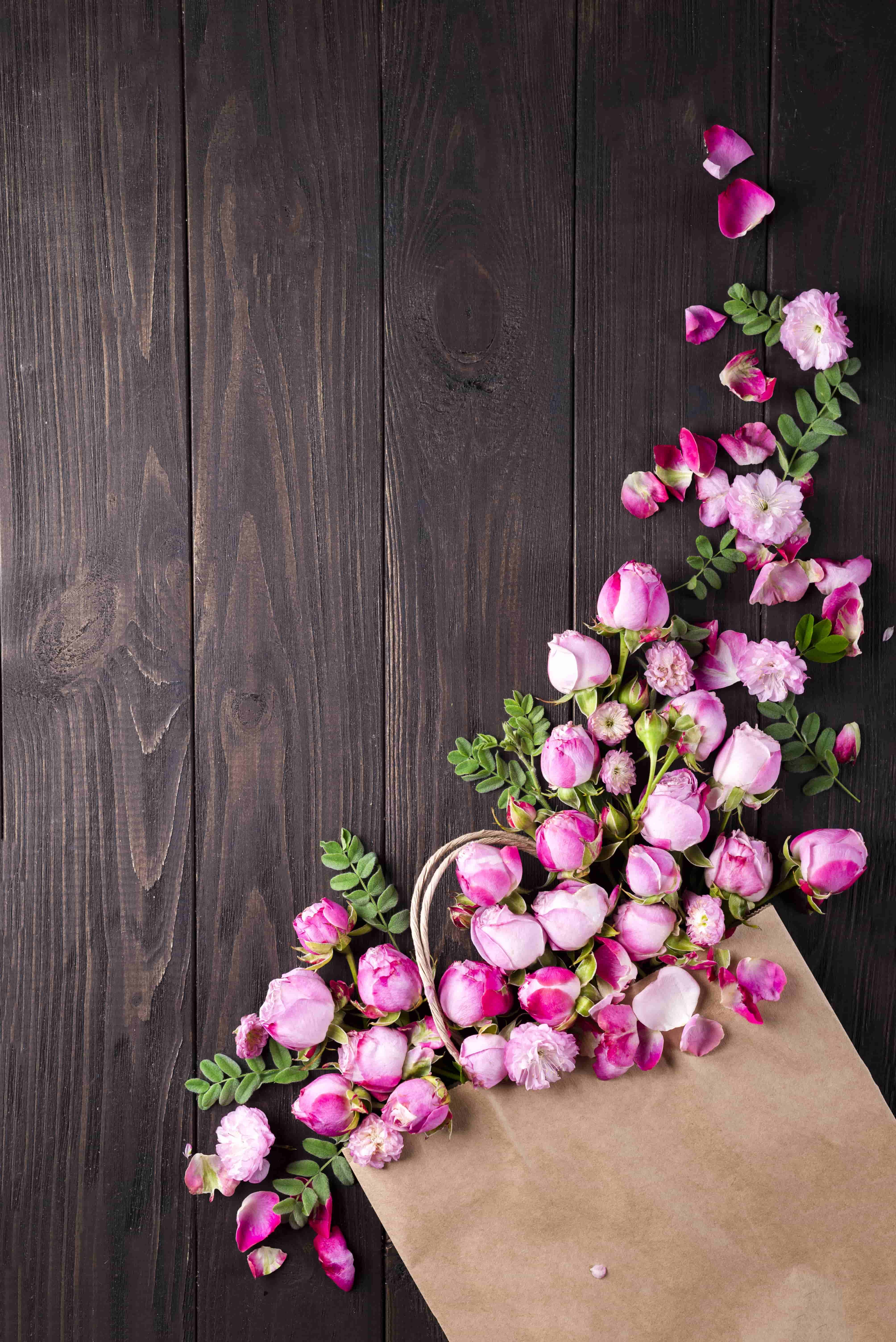 100+ Rose Images | Download Rose Images in HD For Free - Az-Quotes