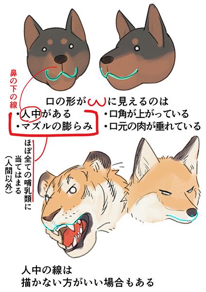 肉食獣の口の描き方 いちあっぷ 動物のスケッチ 動物 口イラスト