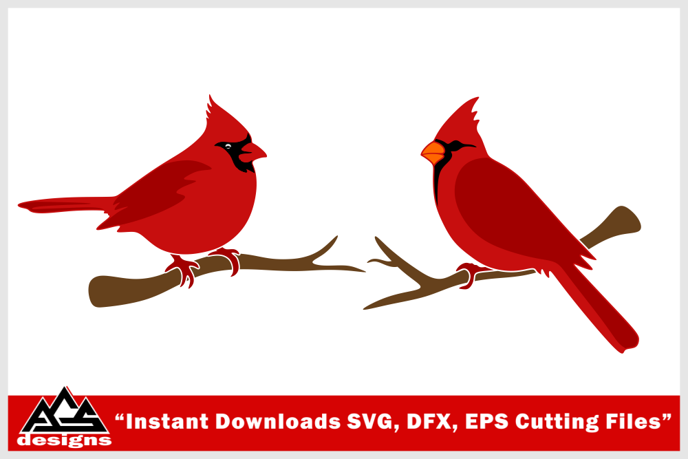 Bird Cardinal Svg Design Digitanza Cardinal Birds Cardinal Drawing Svg Design