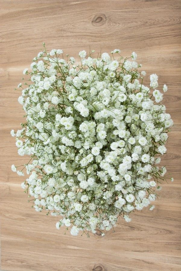 New Love Gypso Gypsophila Babys Breath Large Flowers