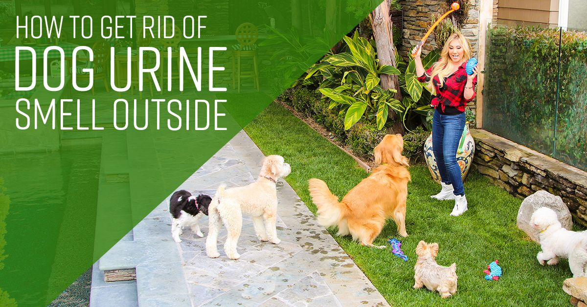 How to get rid of dog urine smell outside in 2020