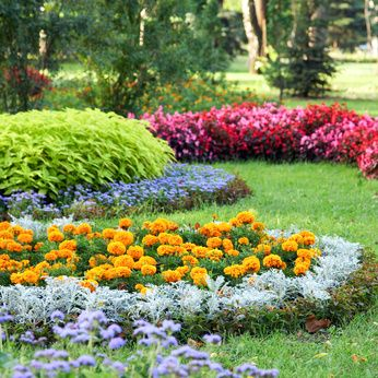 A Garden With The Dusty Miller Plant Showing Off The Others Flower Landscape Beautiful Flowers Garden Plants