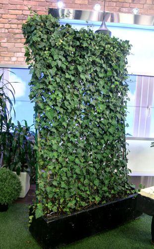 Diy Vertical Garden Harty English Ivy Evergreen Wall