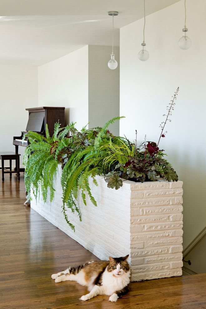Modern planters indoor hall traditional with bulb pedant for Indoor gardening with cats
