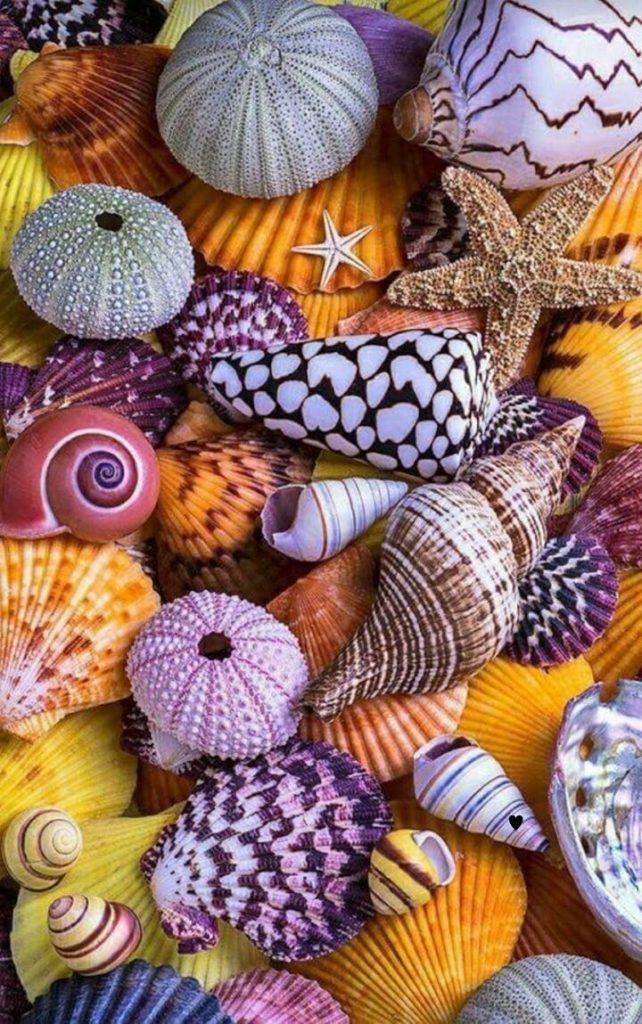 خلفيات موبايل اجمل الخلفيات للموبايل صور خلفيات موبايل بجودة عالية Hd موقع مفيد لك Sea Shells Ocean Treasures Seashell Crafts