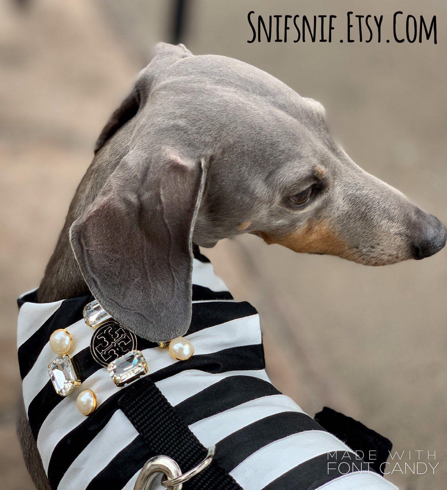 Pin On Snifsnif Custom Dog Harness Designer Dog Jacket