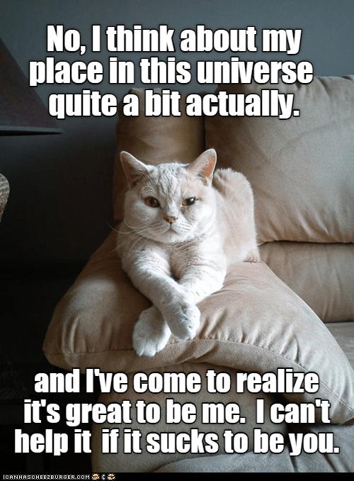 Sofa Cat Cat Quotes Funny Funny Cat Memes Funny Cat Pictures