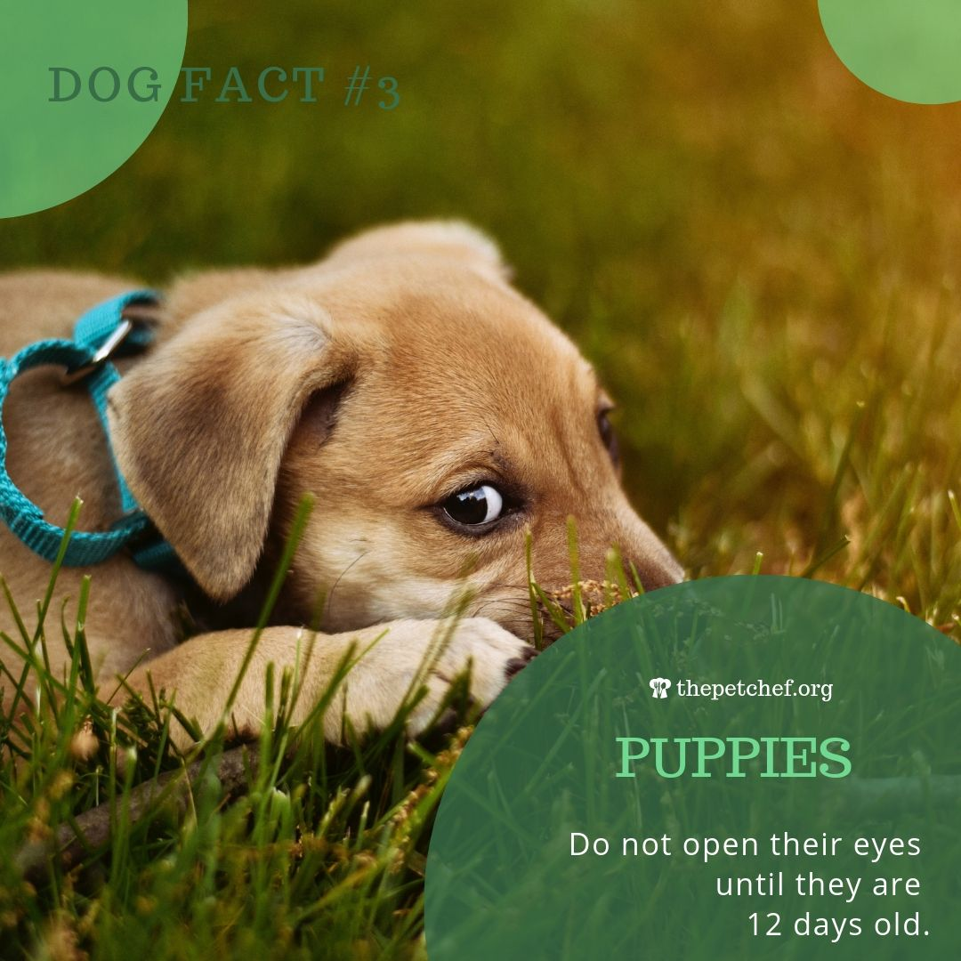 Dog Fact 3 Puppies Dog Facts Puppy Facts Puppies