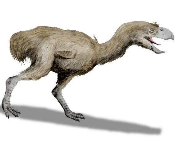Paraphysornis brasiliensis - Prehistoric Animals