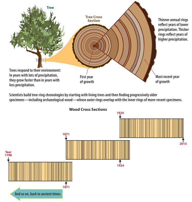 Dendrochronology Tree Study Sixth Grade Science Writing A Term