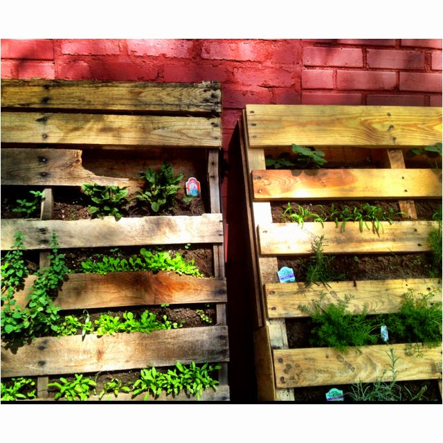 Vertical Gardening In Pallets Against The Back Of The
