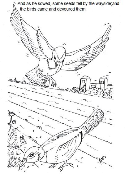 The Parable of the Sower Sunday School Lesson~Sunday