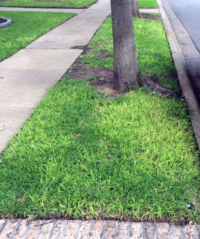 Moss Lawn Benefits Requirements And How To Grow In 2020 Moss Lawn Lawn Benefits Of Gardening