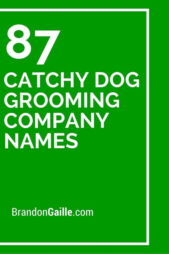 301 most creative dog grooming shop names