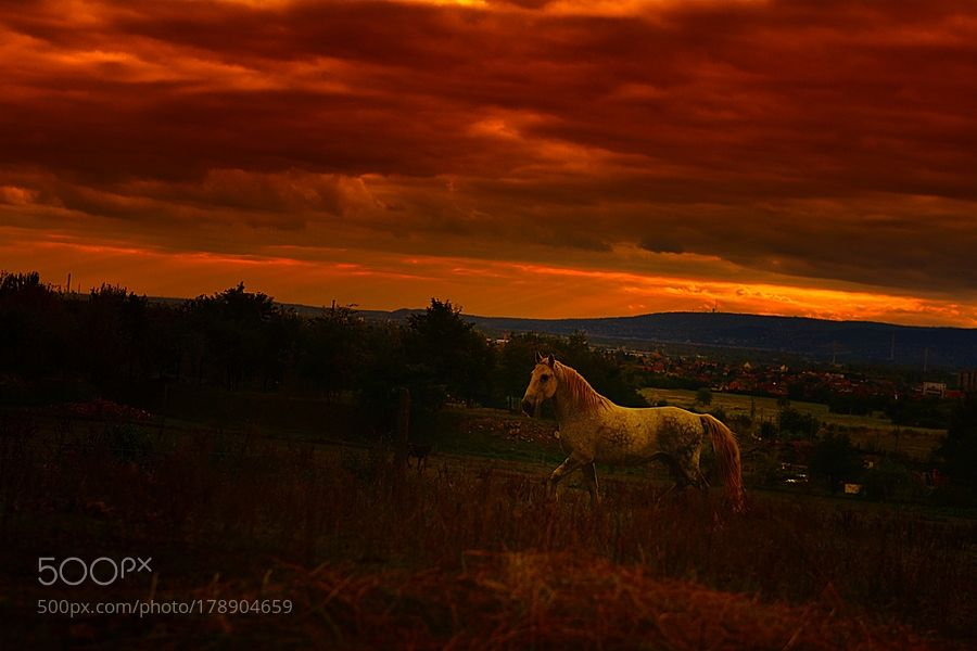 The horse at evening by citromos12. @go4fotos