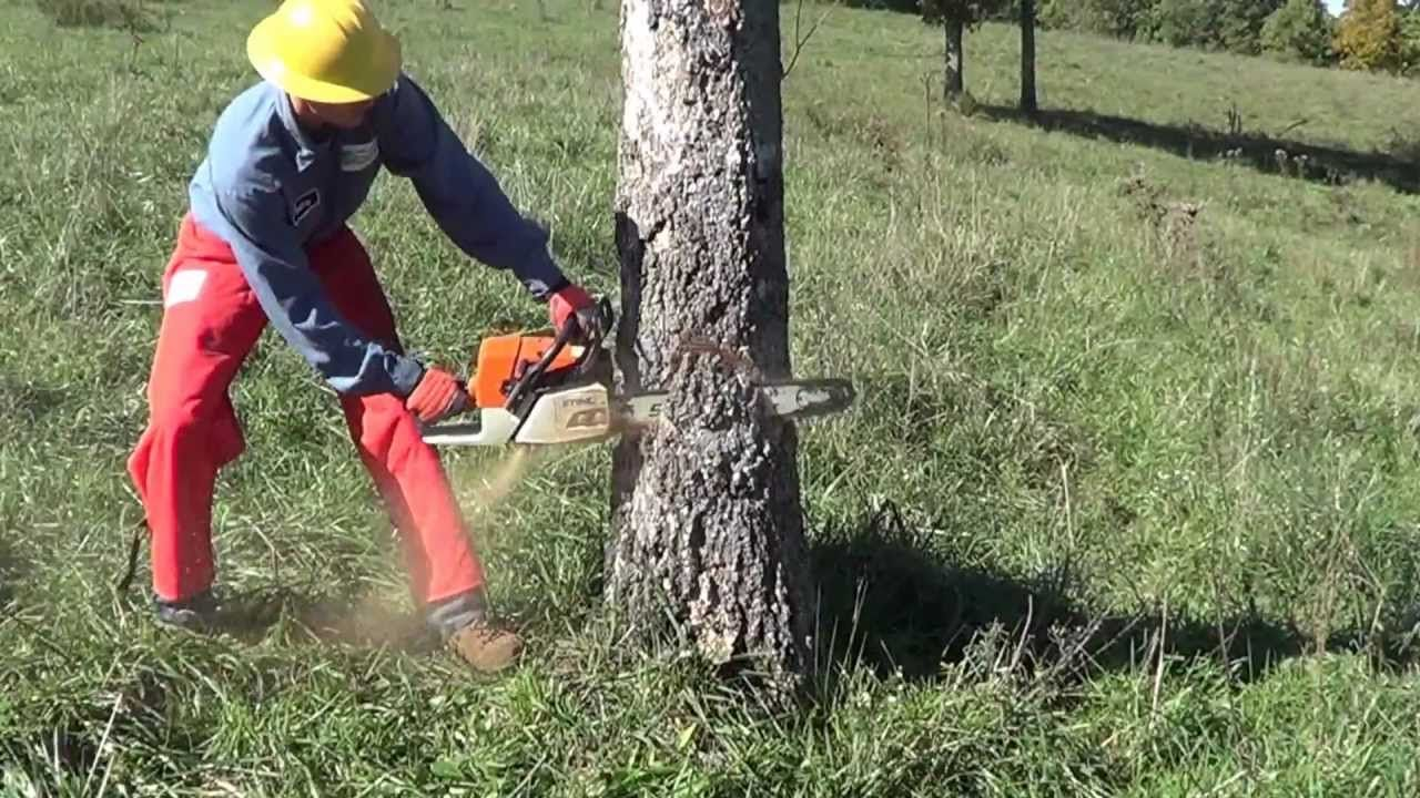 A Safer Way To Fall A Tree Tree Felling Outdoor Power