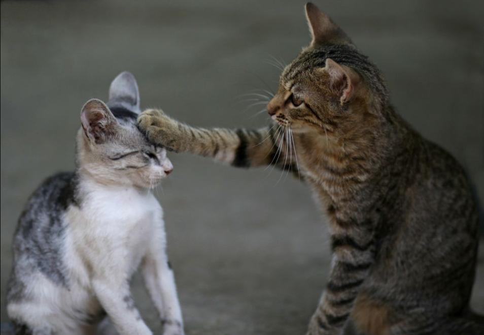 Cara Mengobati Jamur Pada Kucing