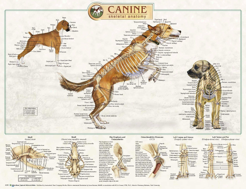 Großartig Introduction To Veterinary Anatomy And Physiology Textbook ...