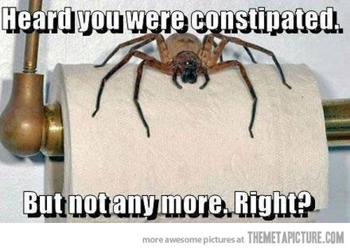 Funny Scary Spider Toilet Paper Spiders Funny Funny Quotes