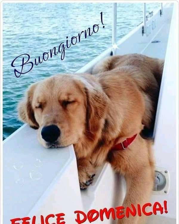 Pin By Janet Lane On Buongiorno Senza Citazioni In 2020 Cute Baby Animals Dog Training Near Me Puppy Training Guide
