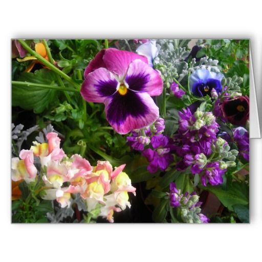 Purple pansy and friends JUMBO Oversized greeting card Sold 2/22/14