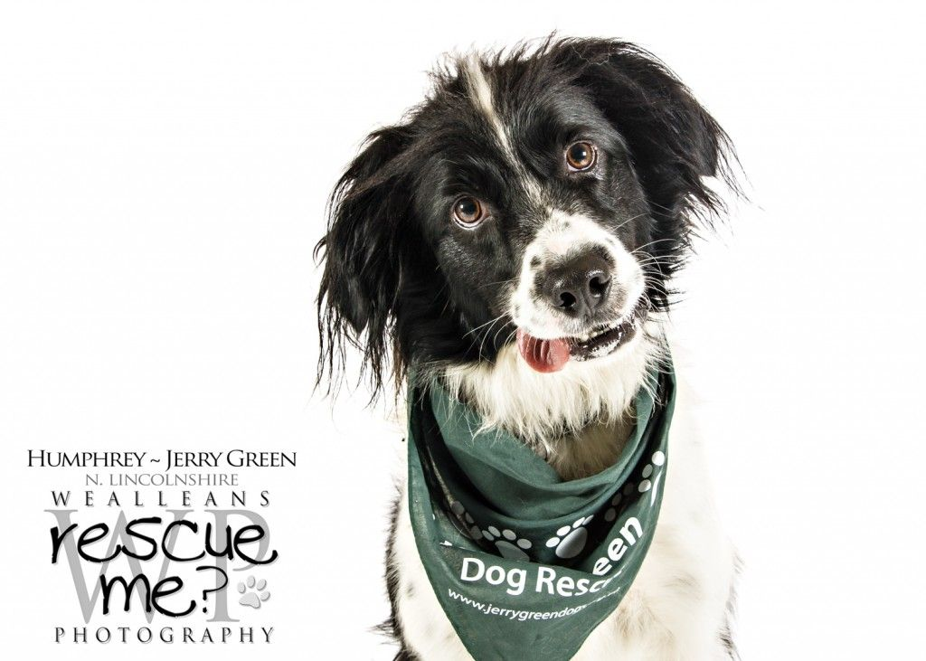 Rescue Sprollie Dog Shelter Dog Photography Wealleans