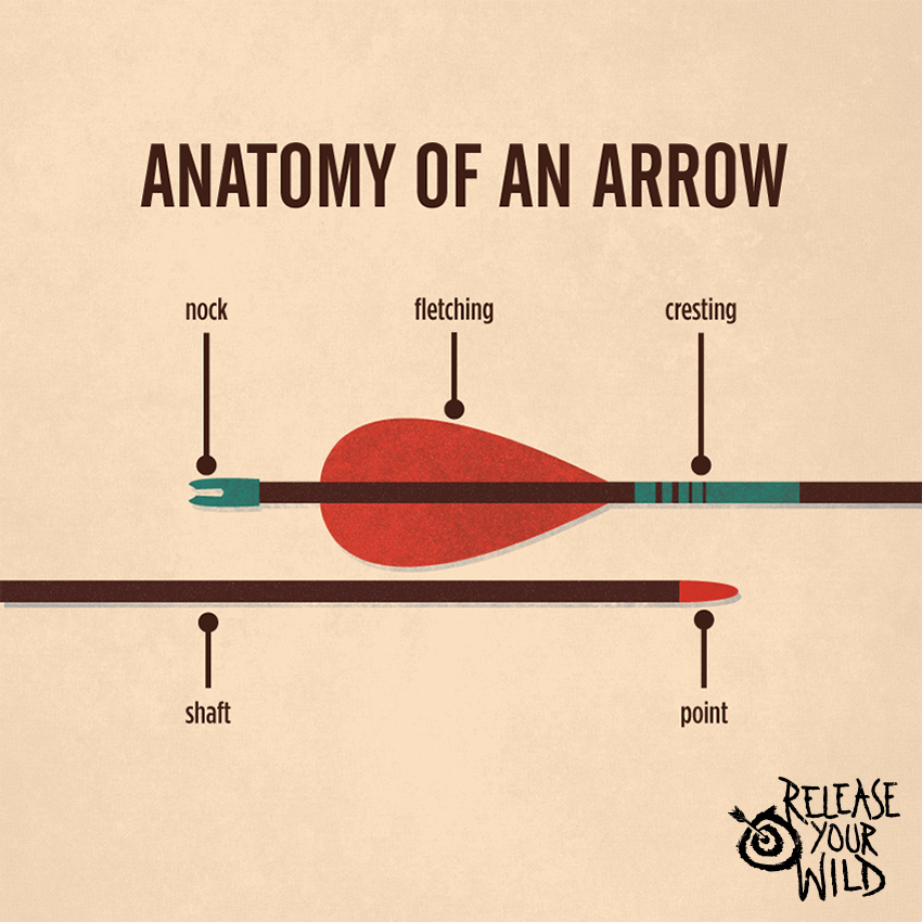 Anatomy of An Arrow, you\'ve got to know this if you\'re an archer ...