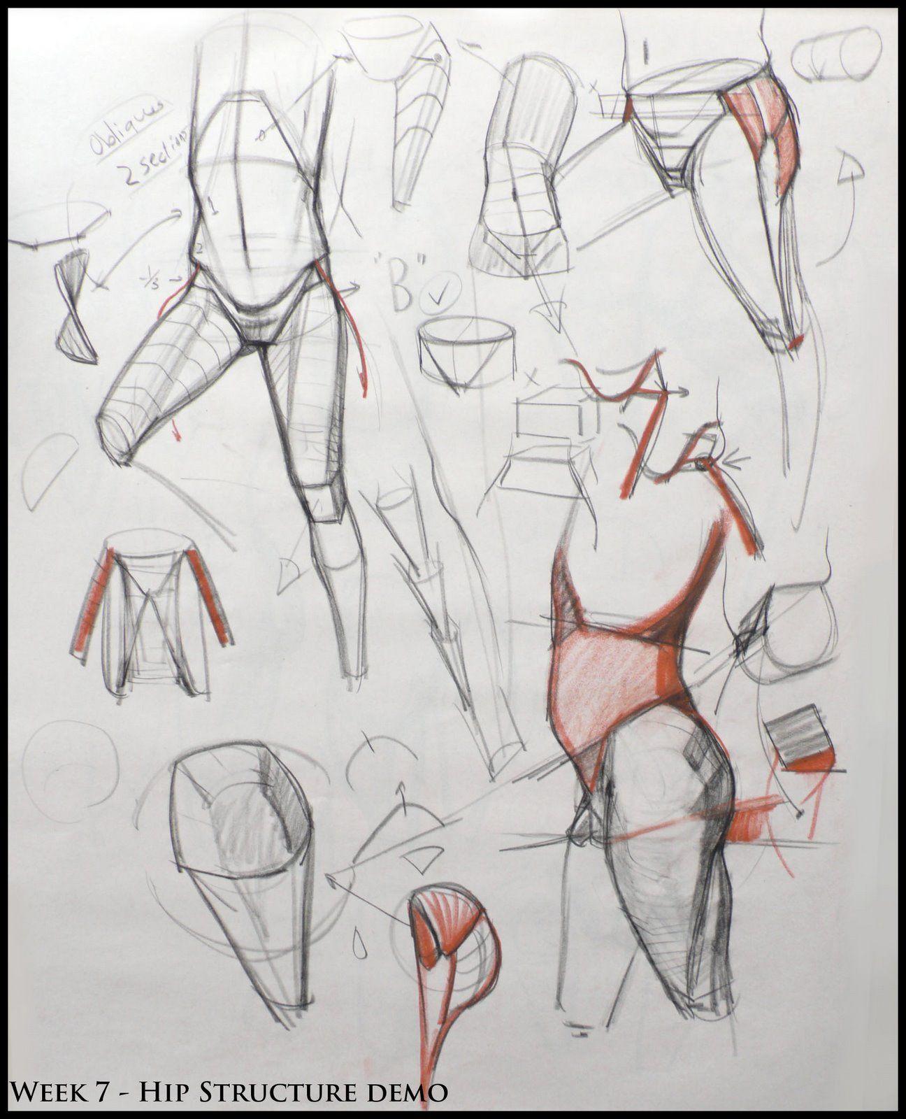 Analytical Figure Drawing SP08: Week 7 - Pelvis & Hip Structure Demo ...