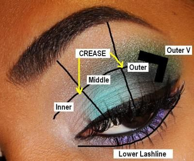 The Basics The Eye Beginner Eyeshadow Eyeshadow Basics Puppy