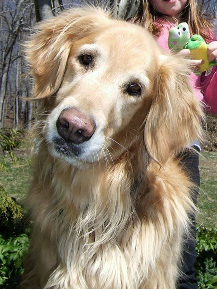 May I Love You Cheer You Up Face From Riley The Golden Retriever So Sweet Such Concern Female Golden Retriever Dogs Golden Retriever Golden Retriever