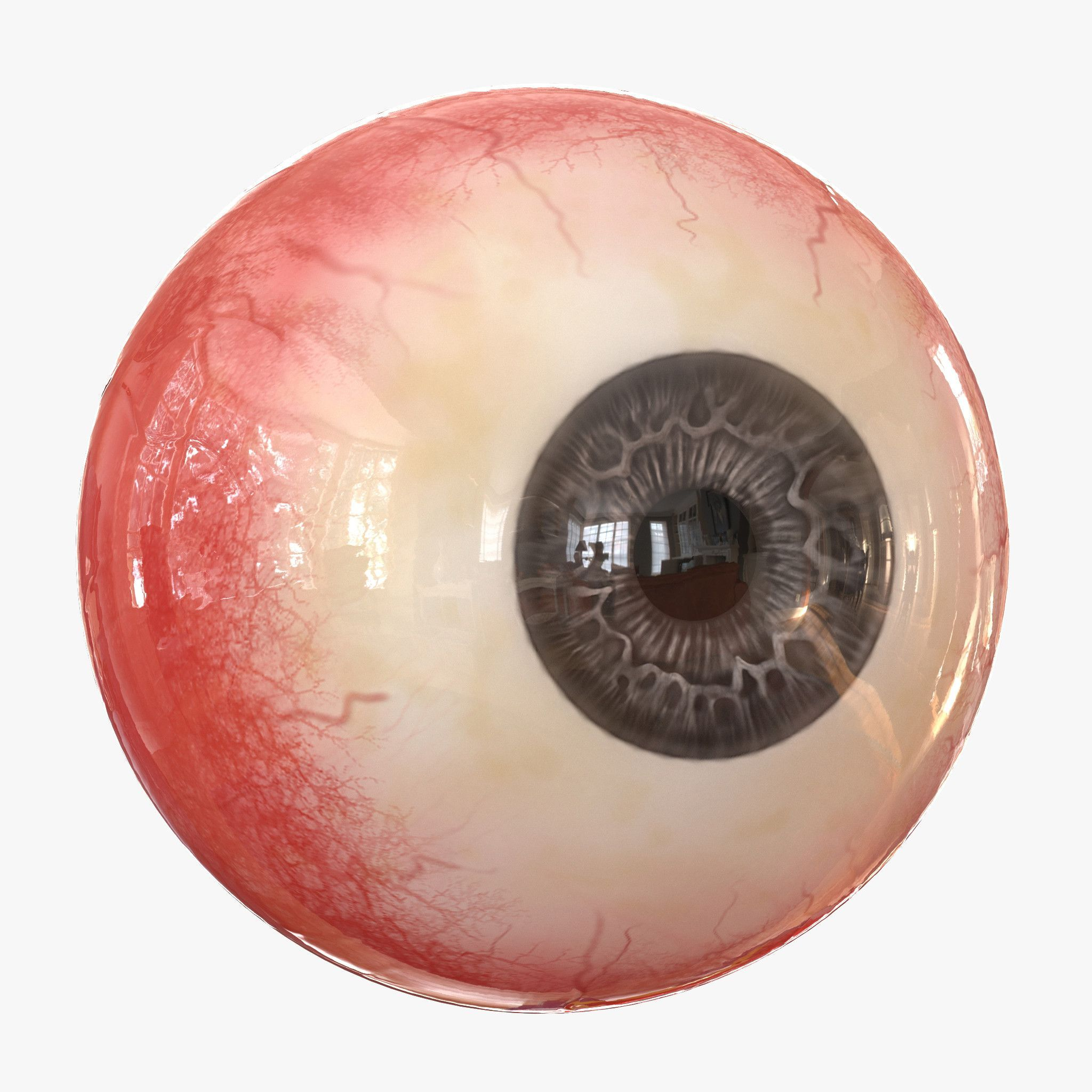 Eye Eyeball Eyes Zbrush Sculpt Iris Pupil Cornea Sclera Lens Vision
