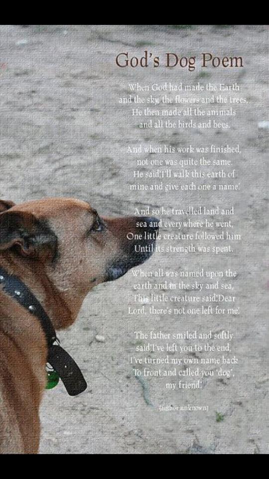 Dog Poem Dog Poems Dogs Dog Quotes
